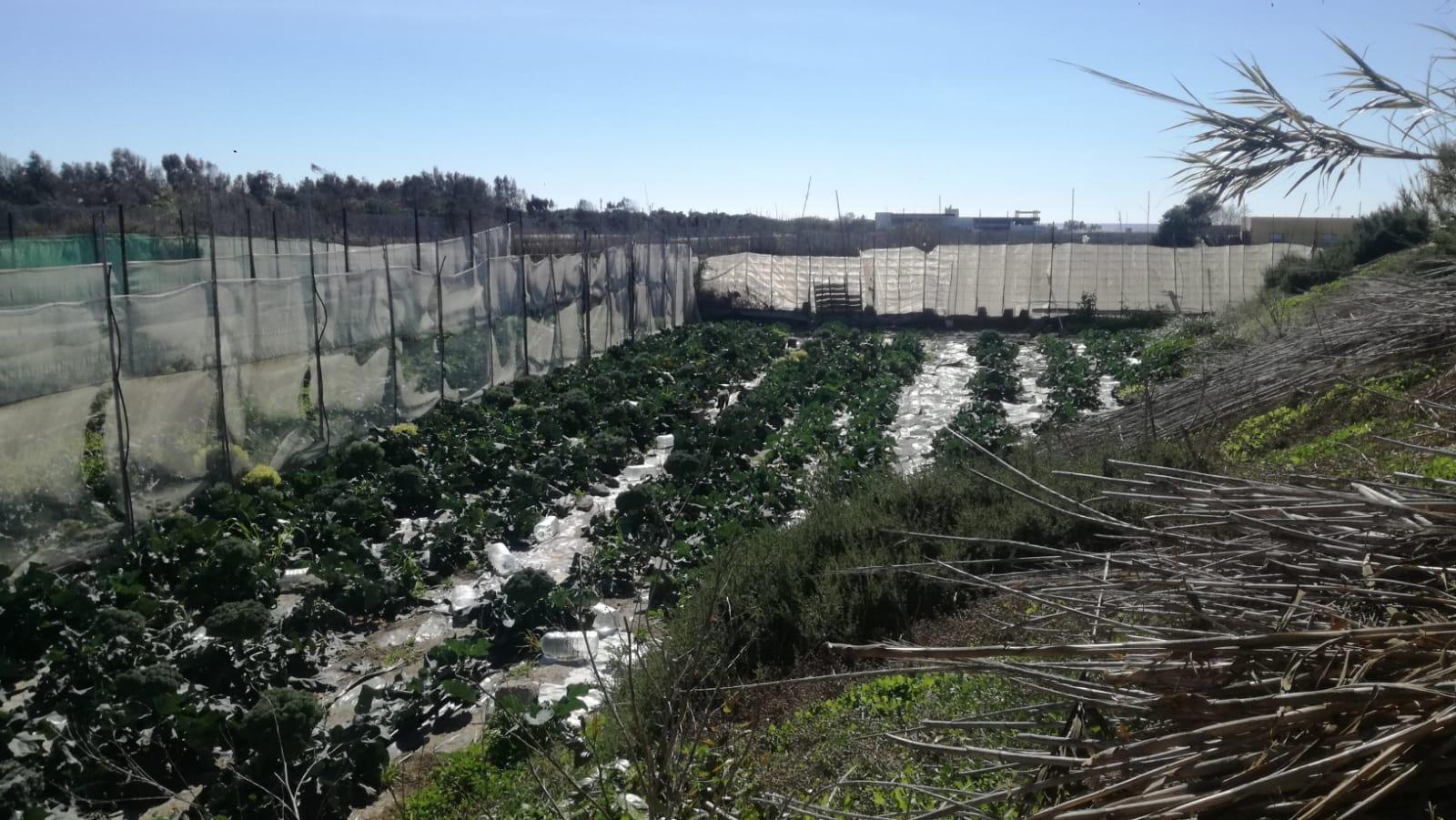 La cosecha en el huerto y presentación del barco Clasijazz. Enero 13